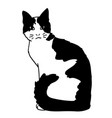 cute realistic cat sitting of vector image vector image