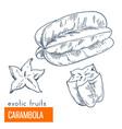 carambola hand drawn vector image vector image