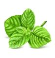 Fresh green mint vector image