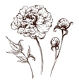 graphic flowers vector image vector image