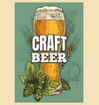beer poster beer glass hop barley vintage style vector image vector image