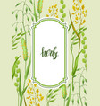 frame with herbs and cereal grass floral design vector image vector image