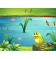 A frog at the riverbank vector image vector image