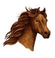 Arabian beautiful brown horse head vector image