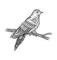 cuckoo bird sketch vector image vector image