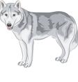 Czechoslovakian Wolfdog vector image vector image