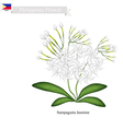 Sampaguita Jasmine National Flower of Philippines vector image