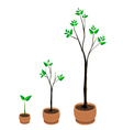 tree growing vector image vector image