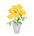 A Group of Cosmos Flowers in A Flower Pot vector image