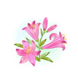 beautiful gift card with pink watercolor lilies vector image vector image