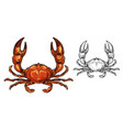 crab seafood animal or shellfish with raised claws vector image vector image