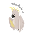 Exotic white cockatoo Bird isolated vector image vector image