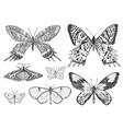 butterfly or wild moths insects mystical symbol vector image vector image