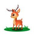 cute little deer in grass vector image