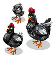 family black chickens mother father and chicken vector image vector image