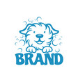 modern dog and pet washing logo vector image vector image