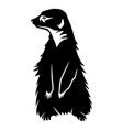 sign of a black meerkat vector image