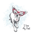 Funny smooth-haired chihuahua wearing glasses vector image
