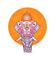boho elephant floral design vector image