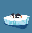 penguin sleep on ice floe vector image vector image