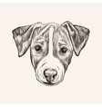 Sketch Jack Russell Terrier Dog Hand drawn face vector image vector image