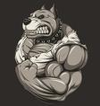Strong ferocious pitbull vector image vector image