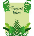 tropical leaves cover trendy botanical floral vector image vector image