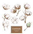 cotton plant collection vector image vector image