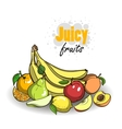 RipeFruits2 vector image vector image