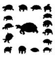 set tortoise silhouette vector image vector image