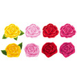 four different colors of roses vector image vector image
