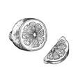 hand drawn lemon vintage outline juicy slice vector image