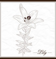 lily flower-1 vector image
