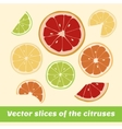 Slices of the citruses vector image