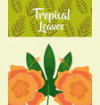 tropical leaves hibiscus flower exotic fashion vector image vector image
