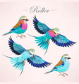 european and lilac-breasted rollers vector image vector image