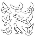 outline flying doves white birds and pigeons vector image