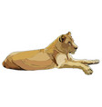 realistic lioness vector image