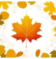 Autumn leaves design elements plus EPS10 vector image
