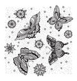 collection butterfly and flower tattoo in old vector image