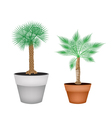Two Isometric Palm Trees in Terracotta Pots vector image vector image