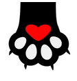 big black cat paw print leg foot with nail claw vector image vector image