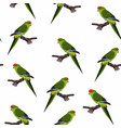 green parrot seamless pattern vector image vector image