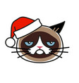 grumpy cat in christmas hat isolated on white vector image