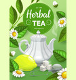 herbal tea with chamomile and mint leaves vector image vector image