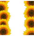 orange yellow sunflower border vector image