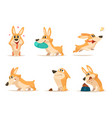 various of funny little dog in vector image vector image