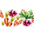 carrots and radish watercolor fresh spring vector image vector image