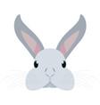 cute head rabbit vector image vector image