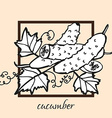 hand drawn cucumbers vector image